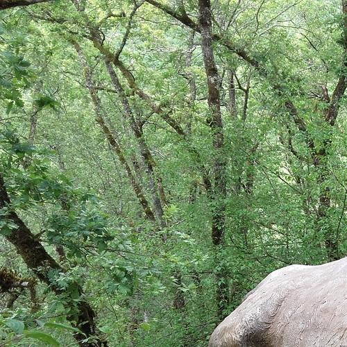Elasmotherium 4 m