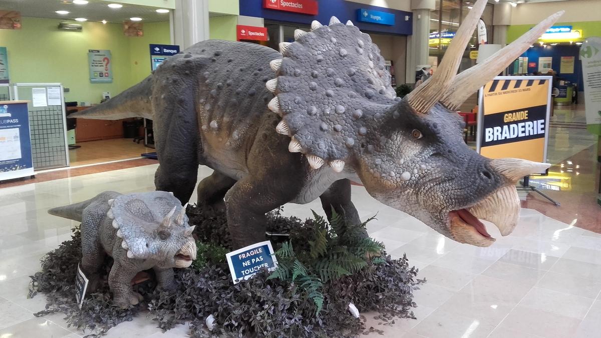 Triceratps family