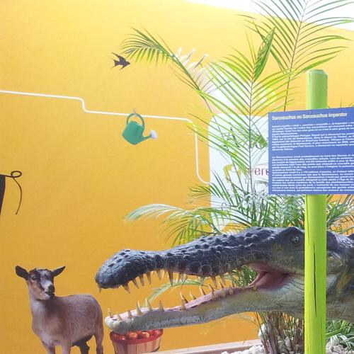 catégorie(s) :  - Sarcosuchus