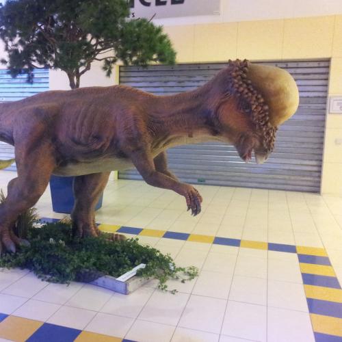 catégorie(s) :  - Pachycéphalosaure family