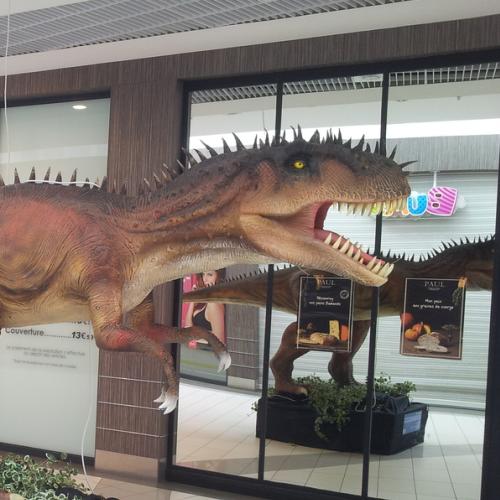catégorie(s) :  - Cératosaure