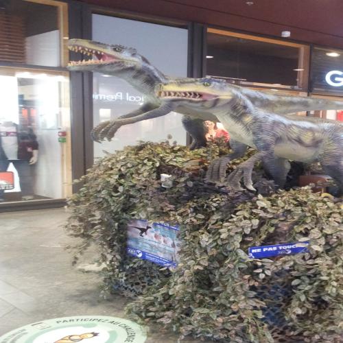 catégorie(s) :  - Raptors